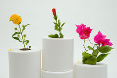 Fun with utility. Toilet paper as a podium for flower winers Royalty Free Stock Photography