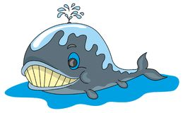 Fun whale stock photography