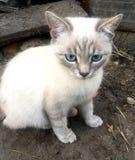 Fun white cat with blue eye stock photo
