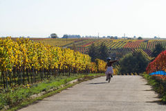 Fun in wineyards. A girl on her bicycle in the wineyards, Germany Royalty Free Stock Photography