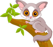 Fun zoo. Galago Stock Images