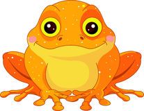 Fun zoo. Golden Toad Royalty Free Stock Image