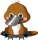 Fun zoo. Platypus. Fun zoo. Illustration of cute Platypus Stock Photography