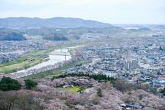 Views of cherry blossoms at Shiroishi RiversideHitome Senbonzakura or thousand cherry trees at sight and Zao Mountain Range seen Stock Photos