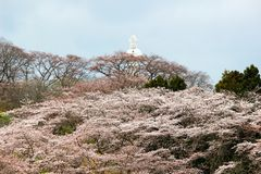 Funaoka-Frieden Kannon und Kirschbäume auf der Bergspitze von Funaoka-Schloss ruinieren Park, Shibata, Miyagi, Tohoku, Japan Stockfoto