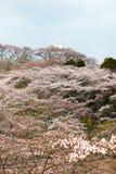 Funaoka-Frieden Kannon und Kirschbäume auf der Bergspitze von Funaoka-Schloss ruinieren Park, Shibata, Miyagi, Tohoku, Japan Lizenzfreie Stockfotografie