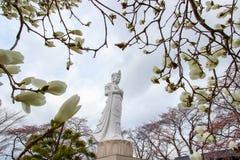 Funaoka-Frieden Kannon, weiße Magnolienblumen und Kirschbäume auf der Bergspitze von Funaoka-Schloss ruinieren Park, Shibata, Toh Lizenzfreie Stockfotografie