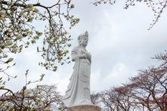 Funaoka Peace Kannon,white magnolia flowers,and cherry trees on the mountaintop of Funaoka Castle Ruin Park,Shibata,Tohoku,Japan. Royalty Free Stock Images