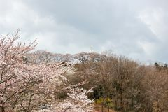 Funaokavrede Kannon en kersenbomen op de bergtop van Funaoka-het Park van de Kasteelruïne, Shibata, Miyagi, Tohoku, Japan Royalty-vrije Stock Fotografie