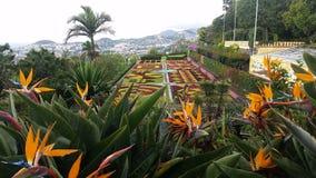 Funchal Botanical Garden, Madeira Stock Photos