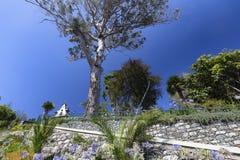 Funchal ogródy botaniczni obraz royalty free