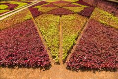 Funchal, Portugal - em julho de 2018 Jardim botânico Monte, Funchal, Madeira, Portugal imagens de stock