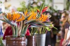 FUNCHAL, PORTUGAL - 25. JUNI: Exotische Blumen in Mercado Dos Lavrad Lizenzfreies Stockfoto