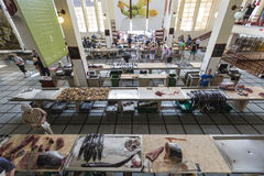 FUNCHAL, PORTUGAL - 25. JUNI: Frische Fische in Mercado Dos Lavradore Lizenzfreies Stockbild