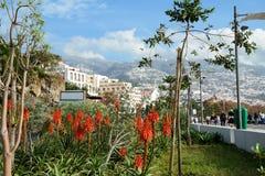 Funchal promenade (il Madera, il Portogallo) Fotografia Stock