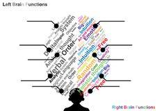 Función izquierda y derecha del cerebro Fotografía de archivo libre de regalías