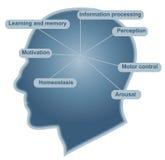 Función principal del cerebro stock de ilustración