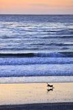 Funcionamento da praia Fotografia de Stock