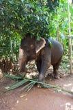 Funcionamento do elefante Imagem de Stock Royalty Free