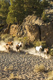 Funcionamento dos cavalos selvagens fotos de stock royalty free