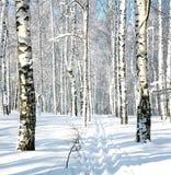 Funcionamiento de esquí en bosque del invierno Imagen de archivo libre de regalías