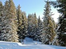 Funcionamiento de esquí en bosque de la nieve en la montaña, Francia Fotos de archivo libres de regalías
