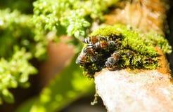 Funcionamiento de la abeja Imagenes de archivo