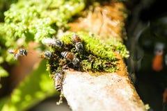 Funcionamiento de la abeja Fotos de archivo