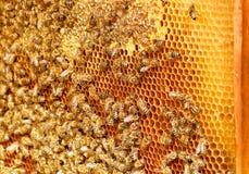 Funcionamiento de la abeja Fotos de archivo libres de regalías