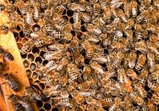 Funcionamiento de la abeja Imágenes de archivo libres de regalías