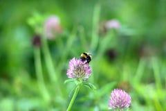 Funcionamiento de la abeja Foto de archivo libre de regalías