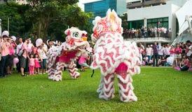 Funcionamiento de la danza del león en el punto rosado Imagen de archivo