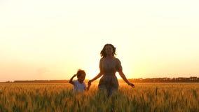 Funcionamiento de la madre y del hijo en el campo de trigo de oro, llevando a cabo las manos El concepto de maternidad, familia f almacen de metraje de vídeo