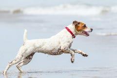 Funcionamiento de la playa del perro Imagen de archivo libre de regalías