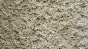 Funcionamiento de las hormigas en rastro de la hormiga almacen de metraje de vídeo