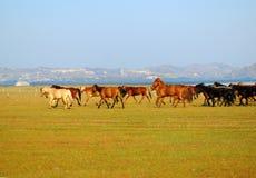 Funcionamiento de los caballos Imagen de archivo libre de regalías
