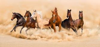 Funcionamiento de los caballos Foto de archivo libre de regalías
