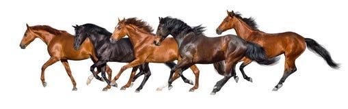 Funcionamiento de los caballos aislado imagenes de archivo