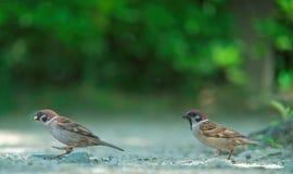 Funcionamiento de los pájaros Fotos de archivo libres de regalías