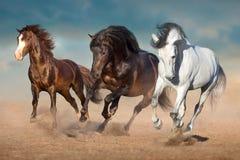 Funcionamiento de tres caballos en arena imagenes de archivo