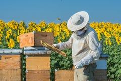Funcionamiento del apicultor Imagen de archivo libre de regalías