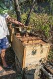 Funcionamiento del apicultor Imágenes de archivo libres de regalías