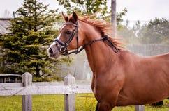 Funcionamiento del caballo Foto de archivo