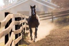 Funcionamiento del caballo Imagen de archivo