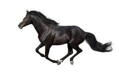 Funcionamiento del caballo aislado foto de archivo