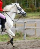Funcionamiento del caballo blanco Fotografía de archivo libre de regalías