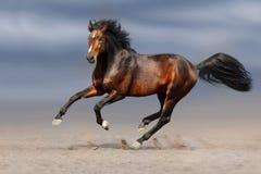 Funcionamiento del caballo de bahía Fotografía de archivo