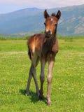 Funcionamiento del caballo del bebé Fotografía de archivo libre de regalías