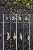 Funcionamiento del caracol, cerca de la meta, un dos tres en la tierra, f Imágenes de archivo libres de regalías