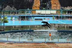 Funcionamiento del delfín en el parque en Hanoi, Vietnam - julio, 27,2014 imagenes de archivo